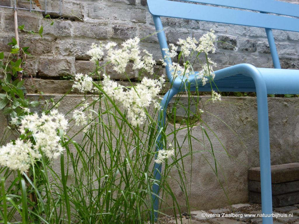 voorbeeld tuinontwerp patio scoriabricks