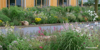 openbaar groen prairie beplanting natuur bij huis berm