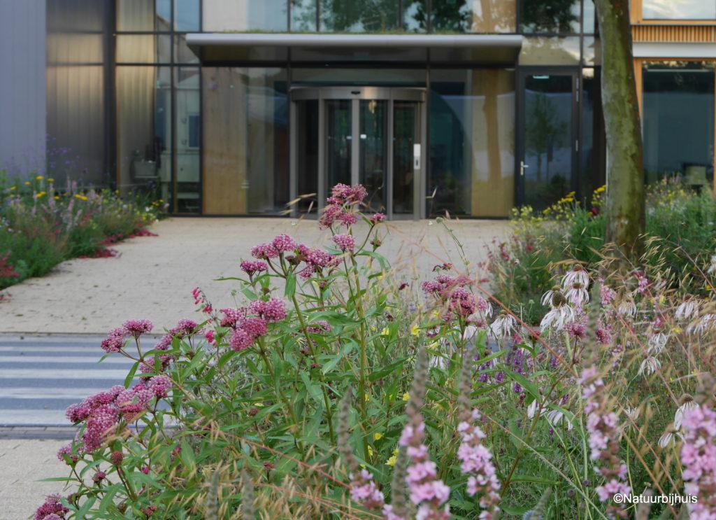 plantingdesign praireigarden natuur bij huis company garden