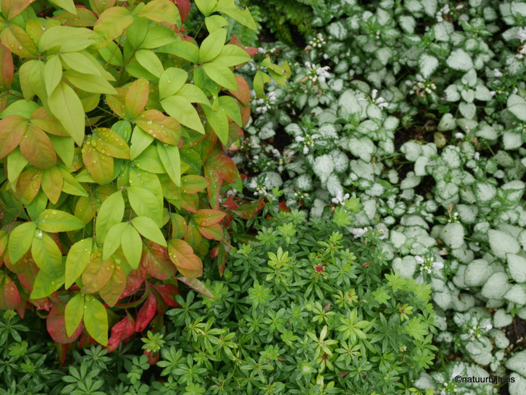 bladcontrast beplanting natuurbijhuis patio