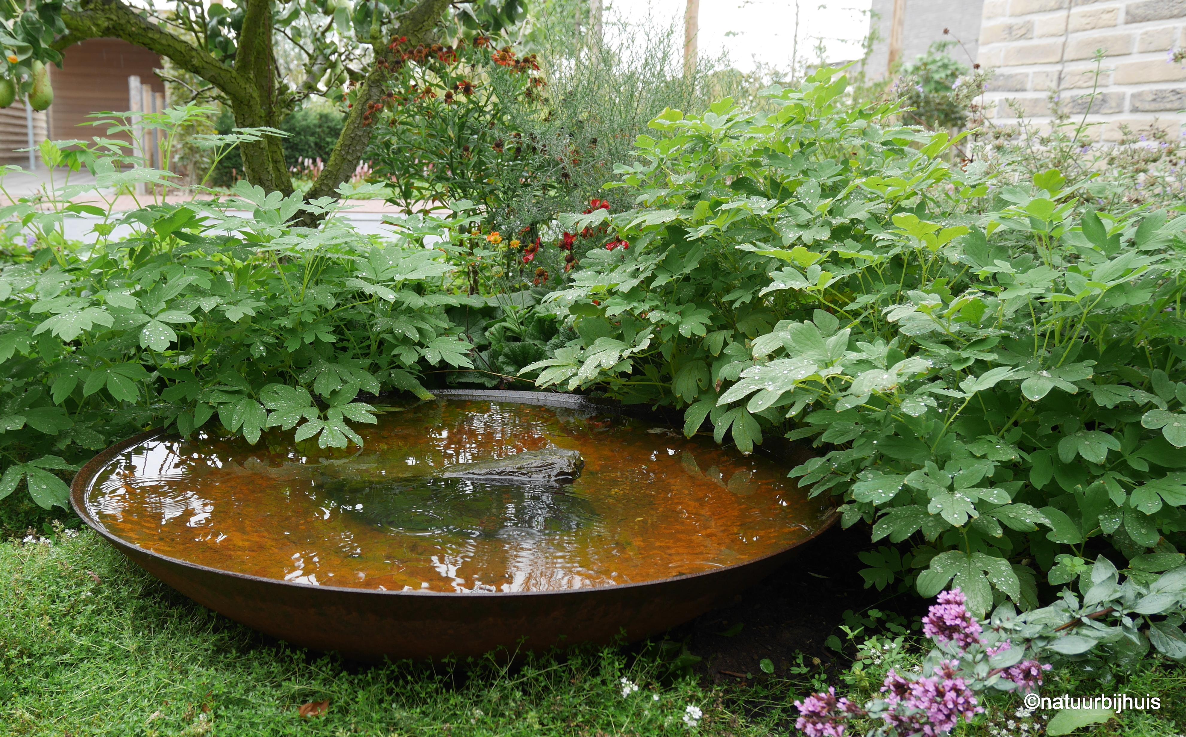 natuurbijhuis tuinontwerp voortuin limburg roermond beplantingsplan cortenstaal waterschaal