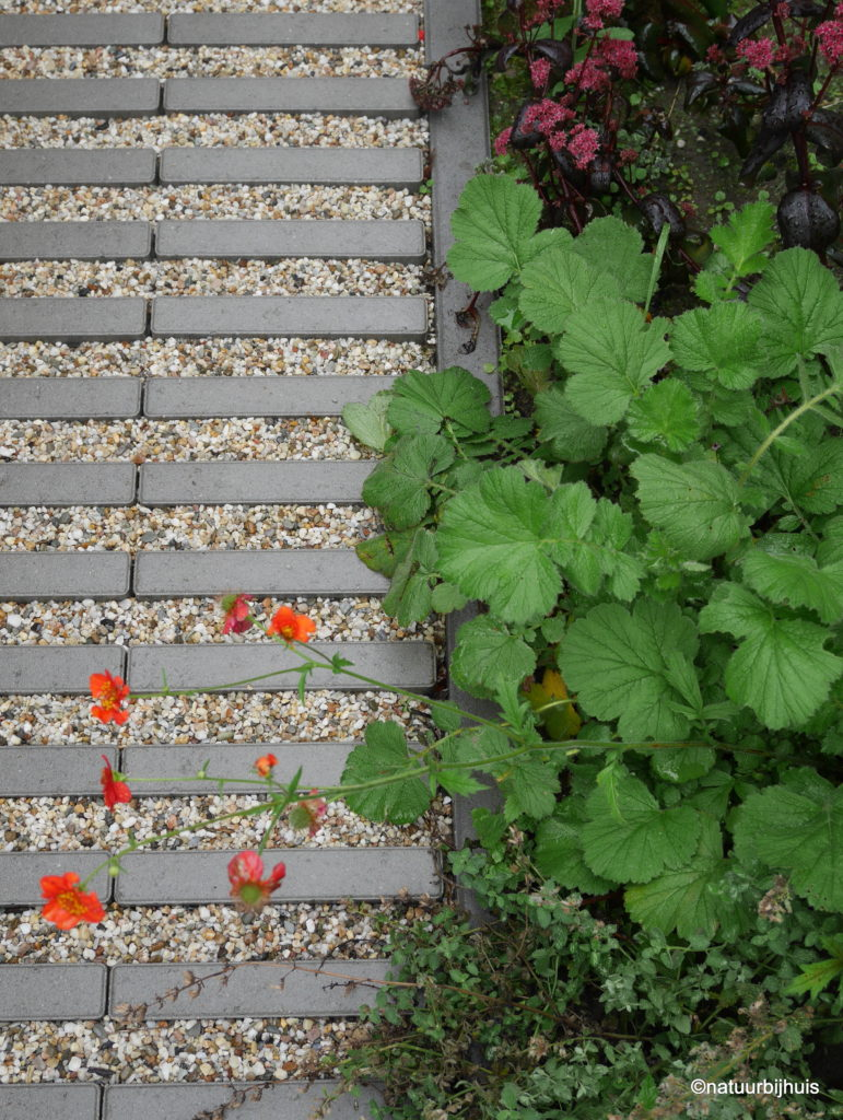 natuurbijhuis tuinontwerp voortuin limburg roermond beplantingsplan parkeerplaats