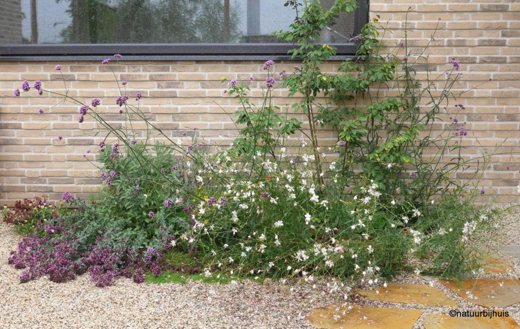 natuurbijhuis tuinontwerp voortuin limburg roermond beplantingsplan
