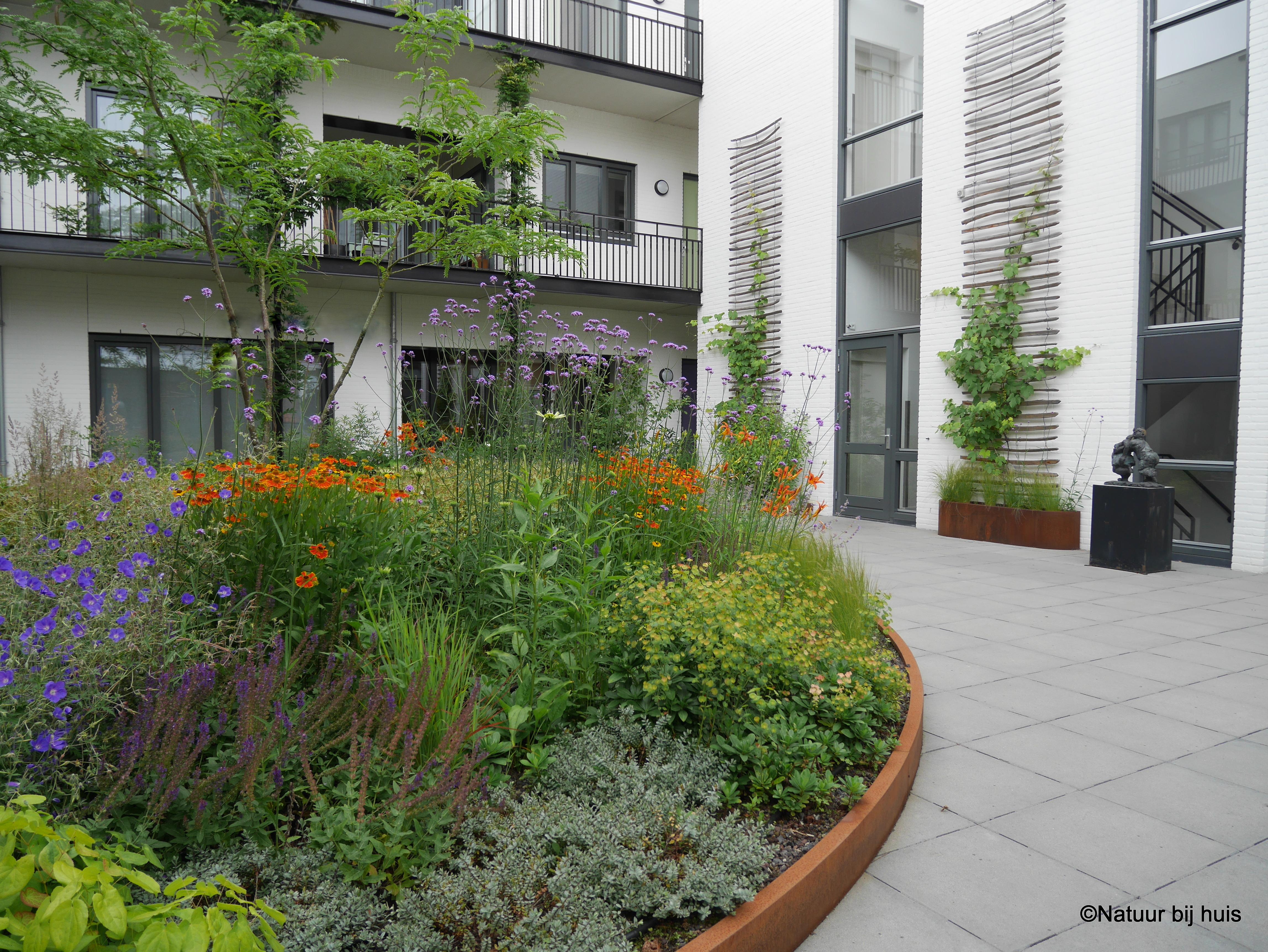voorbeeld tuinontwerp natuur bij huis de schrijver eindhoven daktuin binnentuin ontworpen door natuur bij huis
