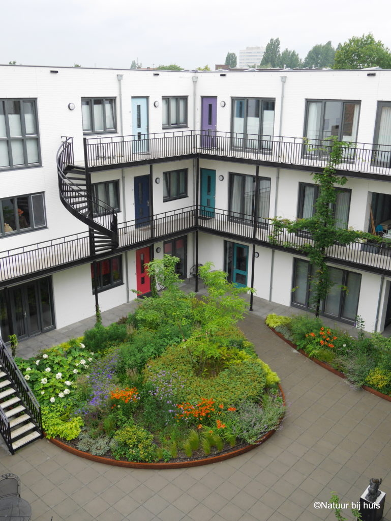voorbeeld tuinontwerp CPO de schrijver Eindhoven daktuin binnentuin ontworpen door natuur bij huis