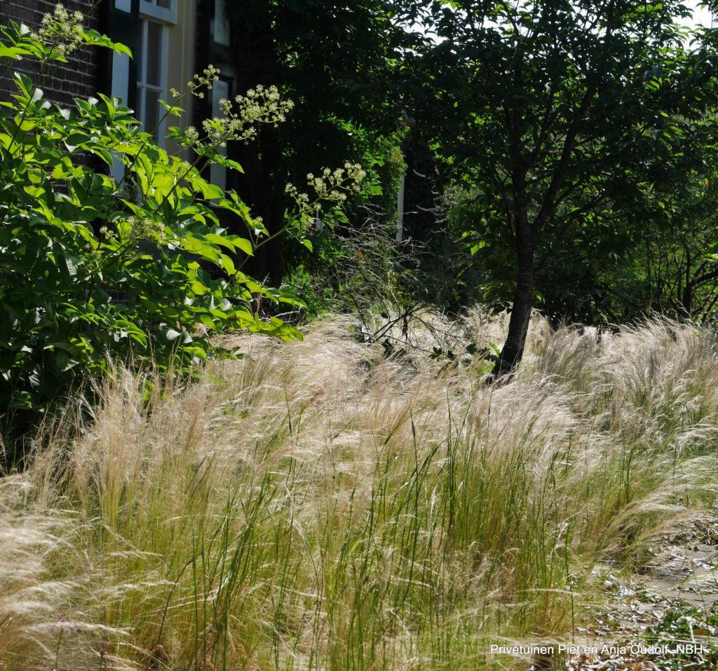 TOG tuinontwerpersgroep studiedag oudolf