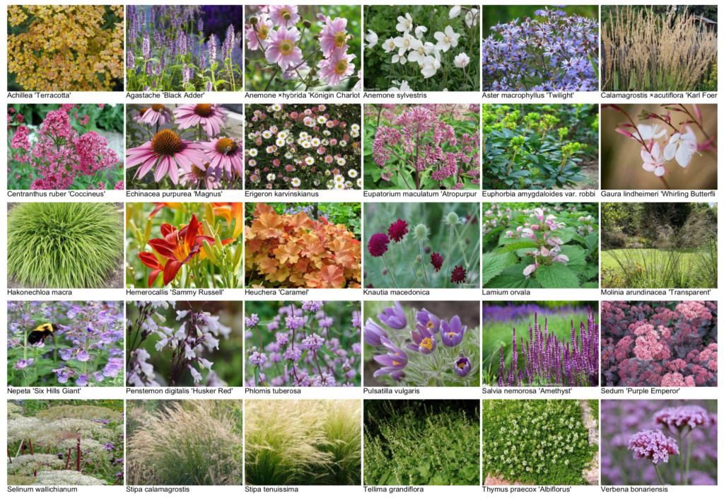 Natuur bij huis voorbeeld tuinontwerp beplantingsplan