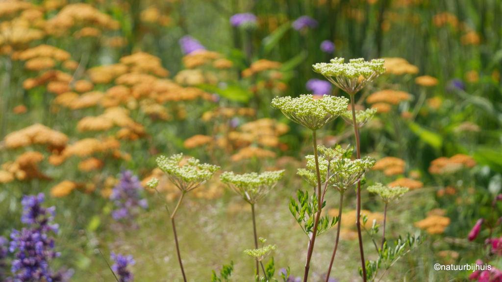 beplanting mooiste rotonde natuur bij huis