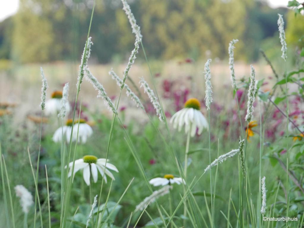 Border als een boeket zorgvuldig samengestelde vaste planten op kleur Echinace