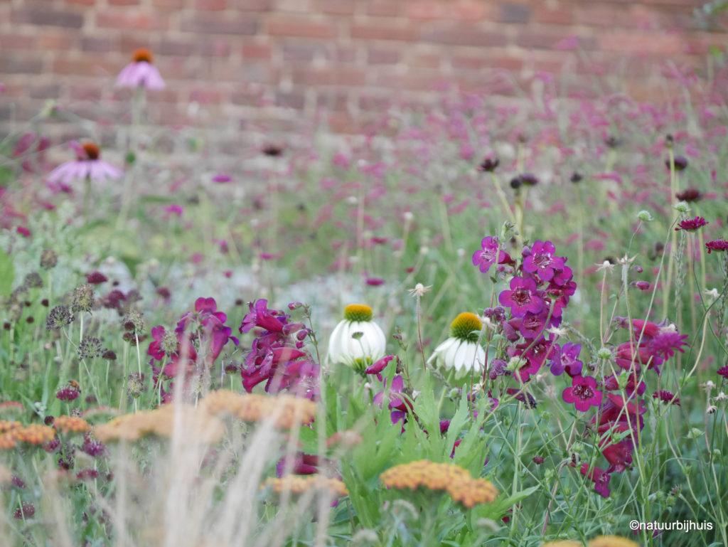 Border als een boeket zorgvuldig samengestelde vaste planten op kleur