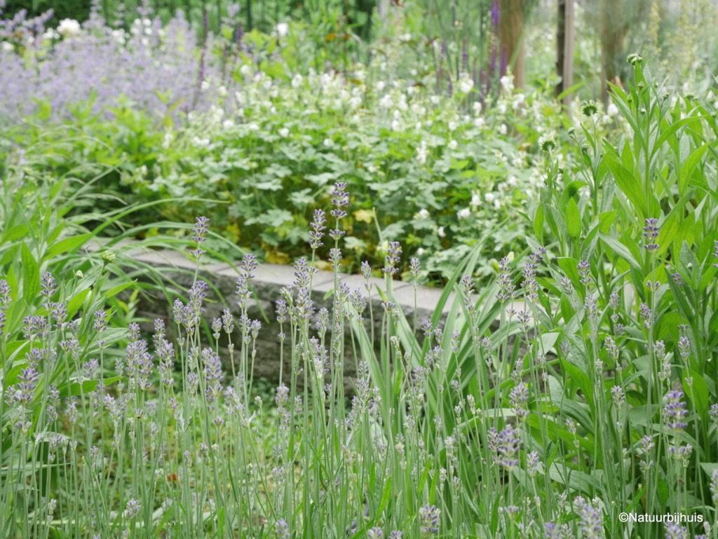 groene voortuin Roermond